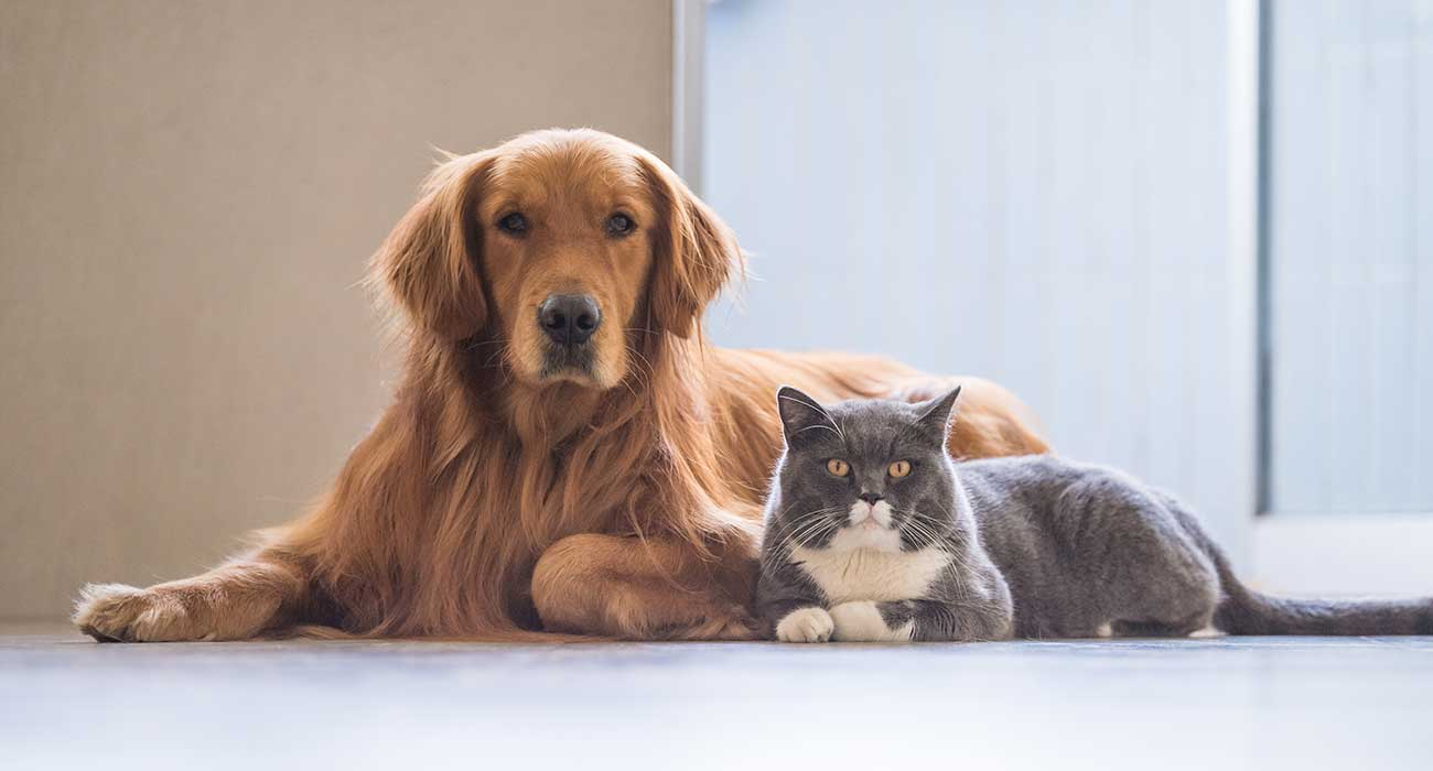 Clinical Pathology for Pets